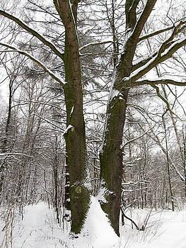 Wojtek Kowalski - Oak