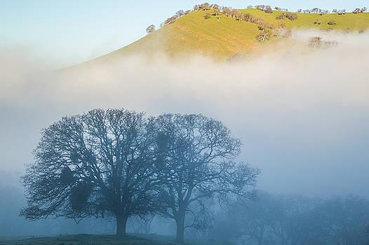 Marc Crumpler - oaks in shadow