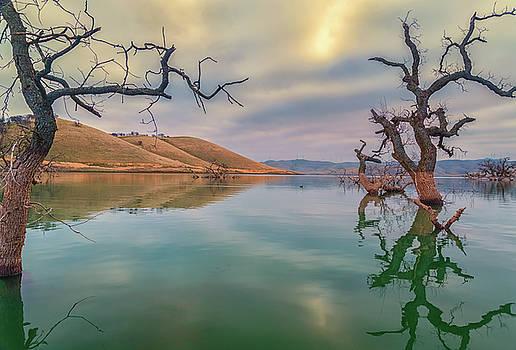 Oaks in Water by Marc Crumpler