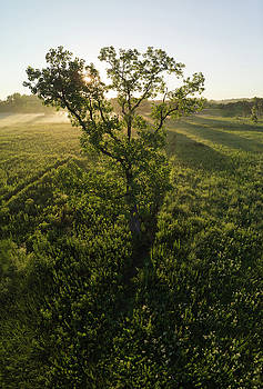 Oak Tree On Prairie At Sunrise Via Drone by Steve Gadomski