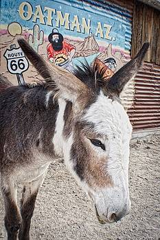 Oatman Native by Dori Basilius