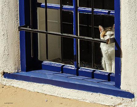 Observant Kitty in Window by Allen Sheffield