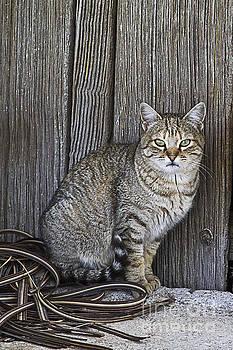 Heiko Koehrer-Wagner - Observant Pet-Cat