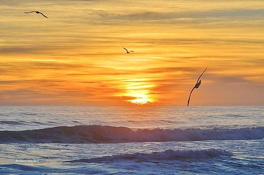 OBX Sunrise  by Barbara Ann Bell