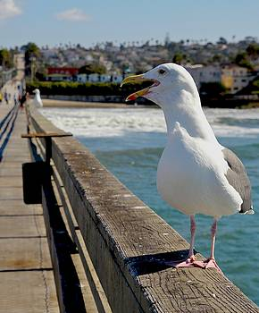 Ocean Beach Gull by Rick Macomber