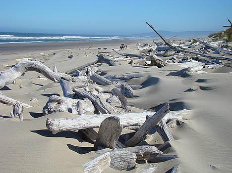 Baslee Troutman - Ocean Coastal art prints Driftwood Beach