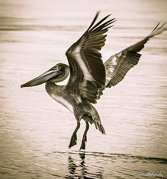 Ocean Dancer  by Debra Forand