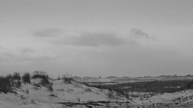 Ocean Dunes at Gilgo by Steve Gravano