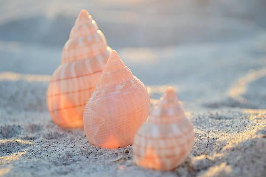 Ocean Jewels by Melanie Moraga