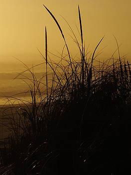 Cindy Treger - Morning Fog Outer Banks Ocean Sunrise