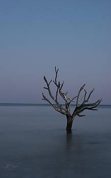 Ocean Tree by Joe Shrader