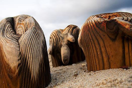 Ocean's Wood by Aurica Voss