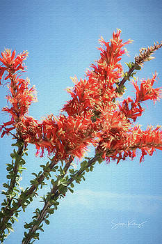 Ocotillo in Bloom by Steve Kelley