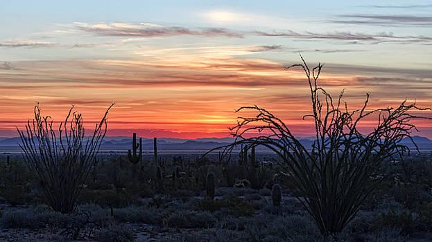 Ocotillo Sunrise by Ryan Seek