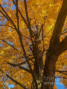 October Day by Joseph Yarbrough