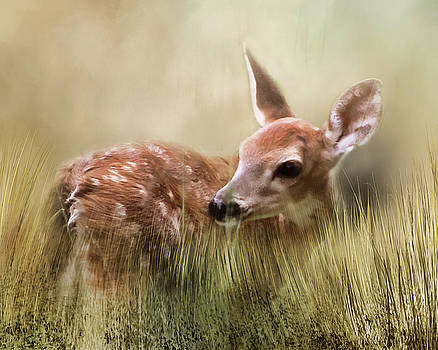 October Fawn by TnBackroadsPhotos