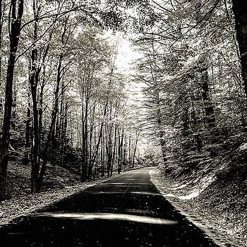October Grayscale  by Kendall McKernon
