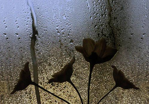 October in Seattle by Jaeda DeWalt