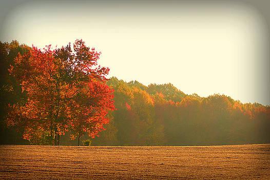 October Morning by Sheryl Bergman