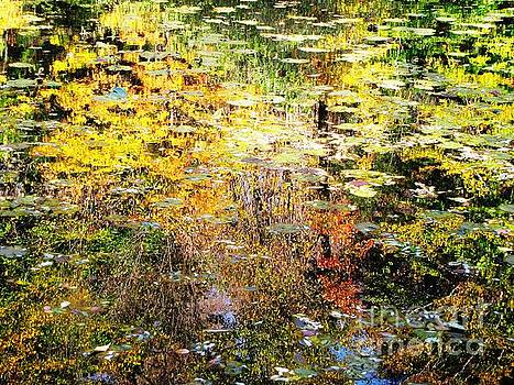 October Pond by Melissa Stoudt