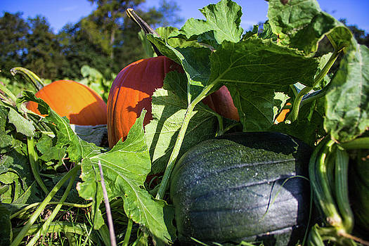 October Pumpkins by Jenn Deane