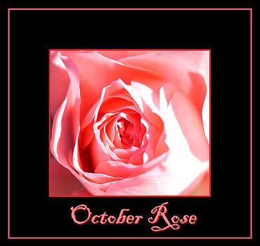 Nick Gustafson - October Rose