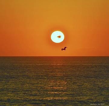 October Sunrise by Barbara Ann Bell