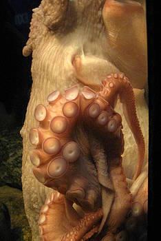 Anne Babineau - octopus