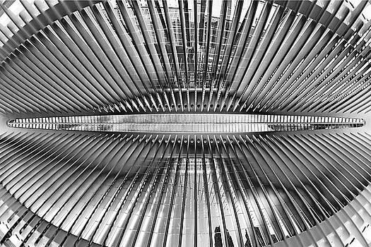 Oculus Rising by Miroslav Vrzala