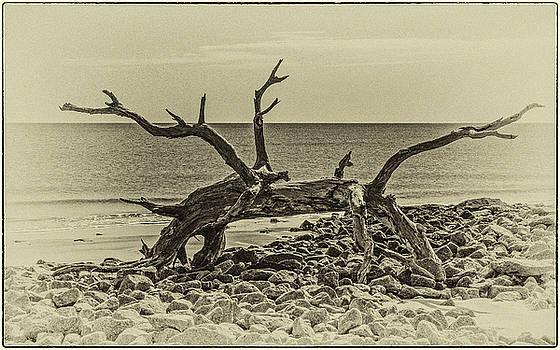 Andrew Wilson - Odd Creature Grazes On The Beach