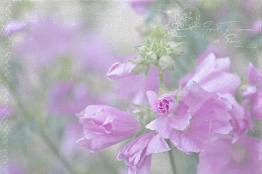 Sandra Foster - Odd Stemmed Wild Flower