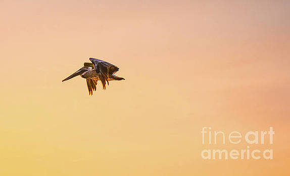 Off Into The Sunset by Lisa Kilby