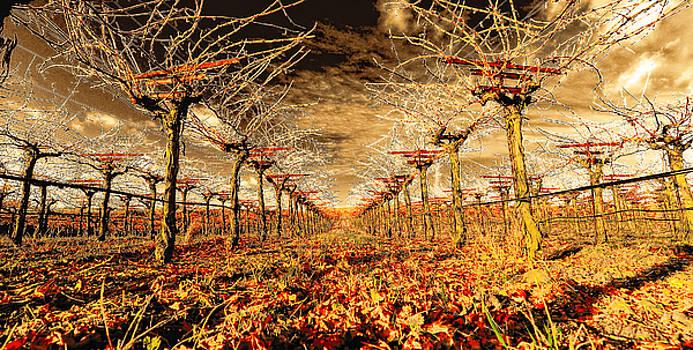 Off of the Vine by Steve Siri