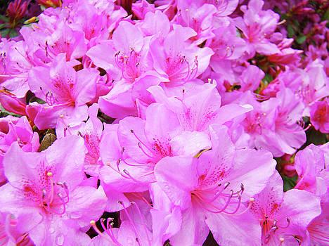 Baslee Troutman - OFFICE ART Azalea Flowers Botanical 31 Azaleas Giclee Art Prints Baslee Troutman