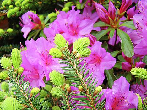 Baslee Troutman - OFFICE ART Pine Conifer Pink Azalea Flowers 38 Azaleas Giclee Art Prints Baslee Troutman