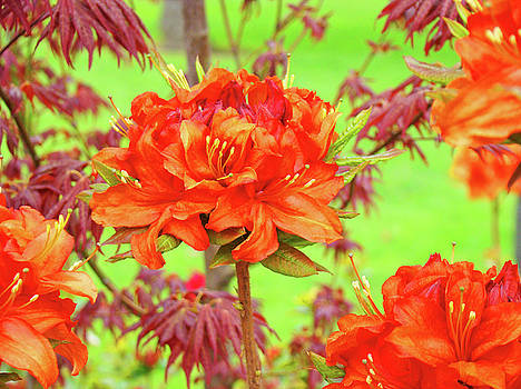 Baslee Troutman - OFFICE ART Prints Orange Azalea Flowers Landscape 13 Giclee Prints Baslee Troutman