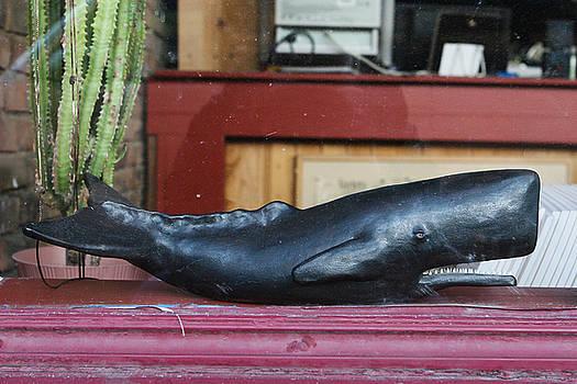 David Ralph Johnson - Office Whale