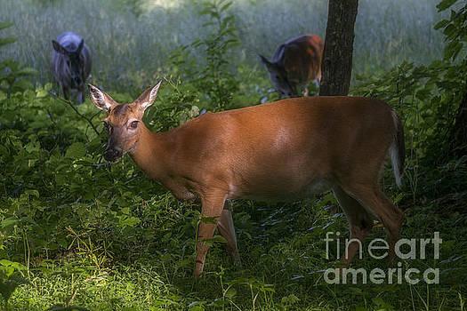 Oh Deer. by Itai Minovitz