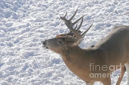 Oh Deer by Sandra Updyke