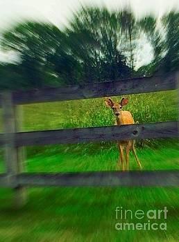 Oh Deer by Vicki Lynn Sodora