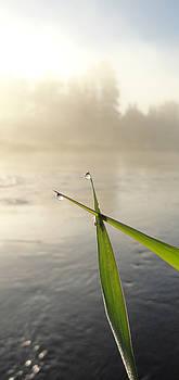 Sue Duda - Oh Morning Mist 2
