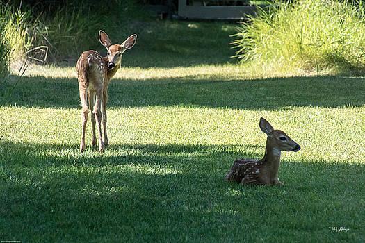 Mick Anderson - Oh My Deer