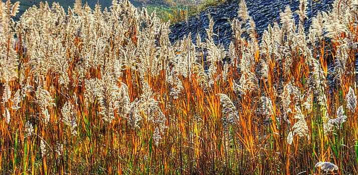 Ohio Country Roads - Roadside Beach Grass in Early Morning Light - Ashtabula County by Michael Mazaika