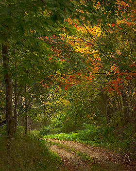 Ohio Driveway by Pam Kaster