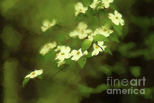 Oil Painting Dogwoods by Darren Fisher