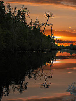 Okefenokee Swamp by Jim Wright