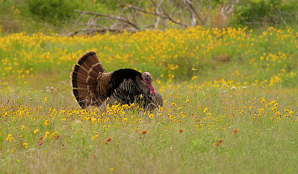Oklahoma Wildlife by Katherine Worley