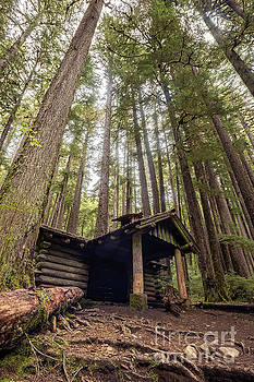 Old Abandoned Cabin in the Woods by Brandon Alms