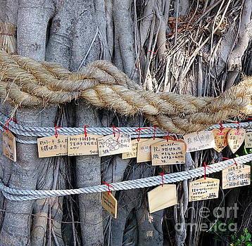 Old Banyan Wishing Tree by Yali Shi