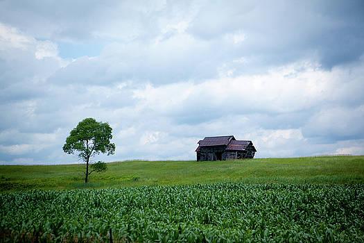 Rich Sirko - Old Barn and Tree